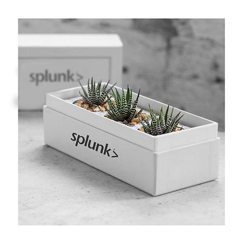 Customized Plant Box
